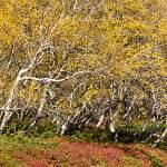 2011-09-22-akureyri-husavik-198.jpg