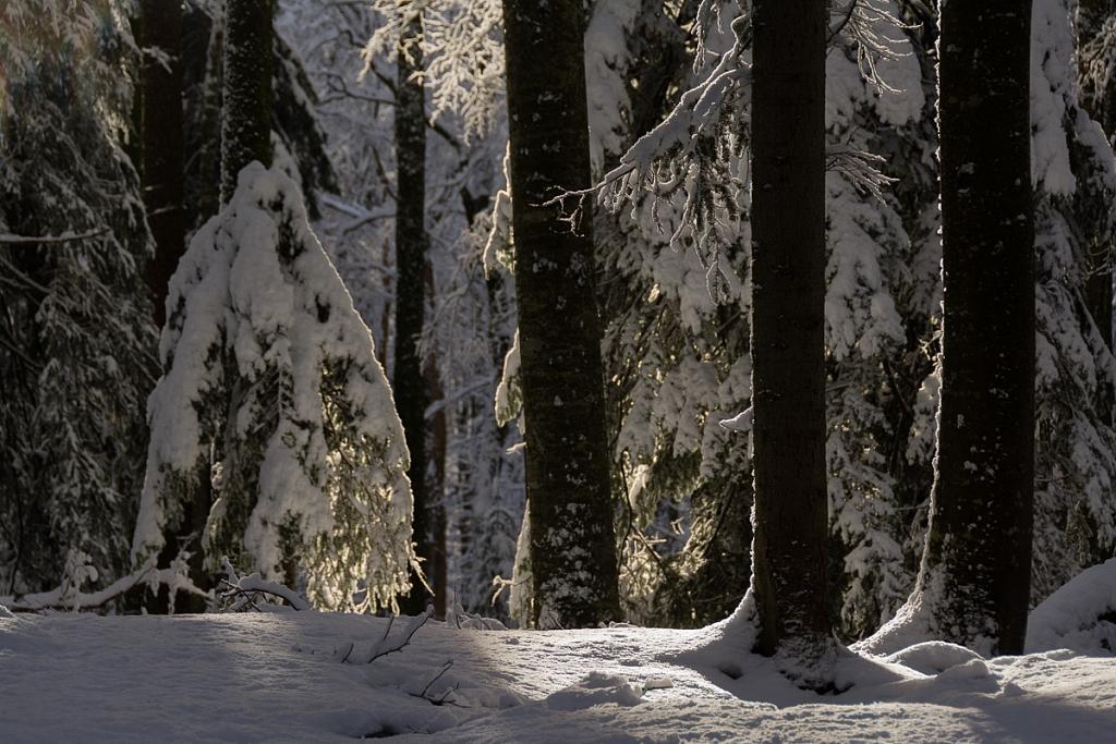 2013-12-27-brunig-311.jpg
