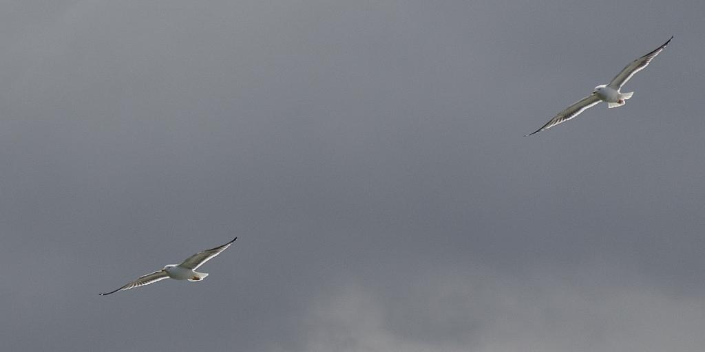 2012-04-13-reykjavik-188.jpg