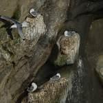 2012-04-13-reykjanes-tour-458.jpg