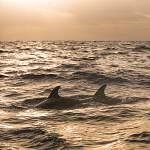 2008-11-13-delphin-tour-381.jpg