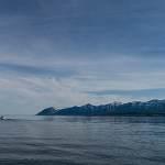 2014-08-28-whale-watching-043.jpg