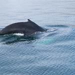 2014-08-28-whale-watching-150.jpg