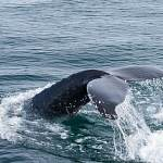 2014-08-28-whale-watching-198.jpg