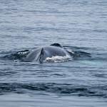 2014-08-28-whale-watching-270.jpg