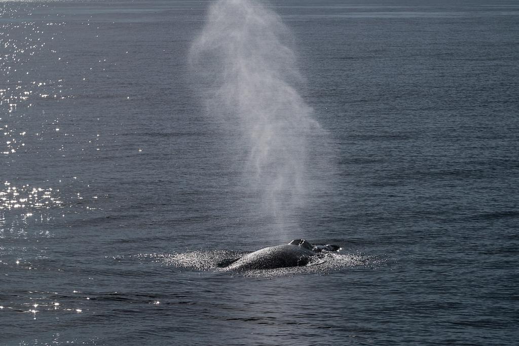 2014-08-28-whale-watching-298.jpg