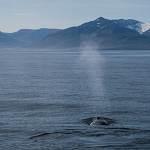2014-08-28-whale-watching-302.jpg