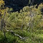 2014-08-30-asbyrgi-dettifoss-282.jpg