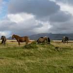 2014-09-10-horses-006.jpg