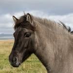 2014-09-10-horses-011.jpg