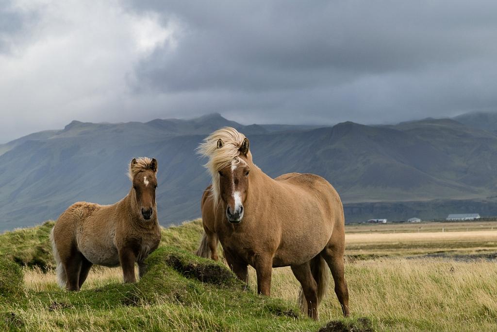 2014-09-10-horses-013.jpg