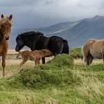 2014-09-10-horses-018.jpg