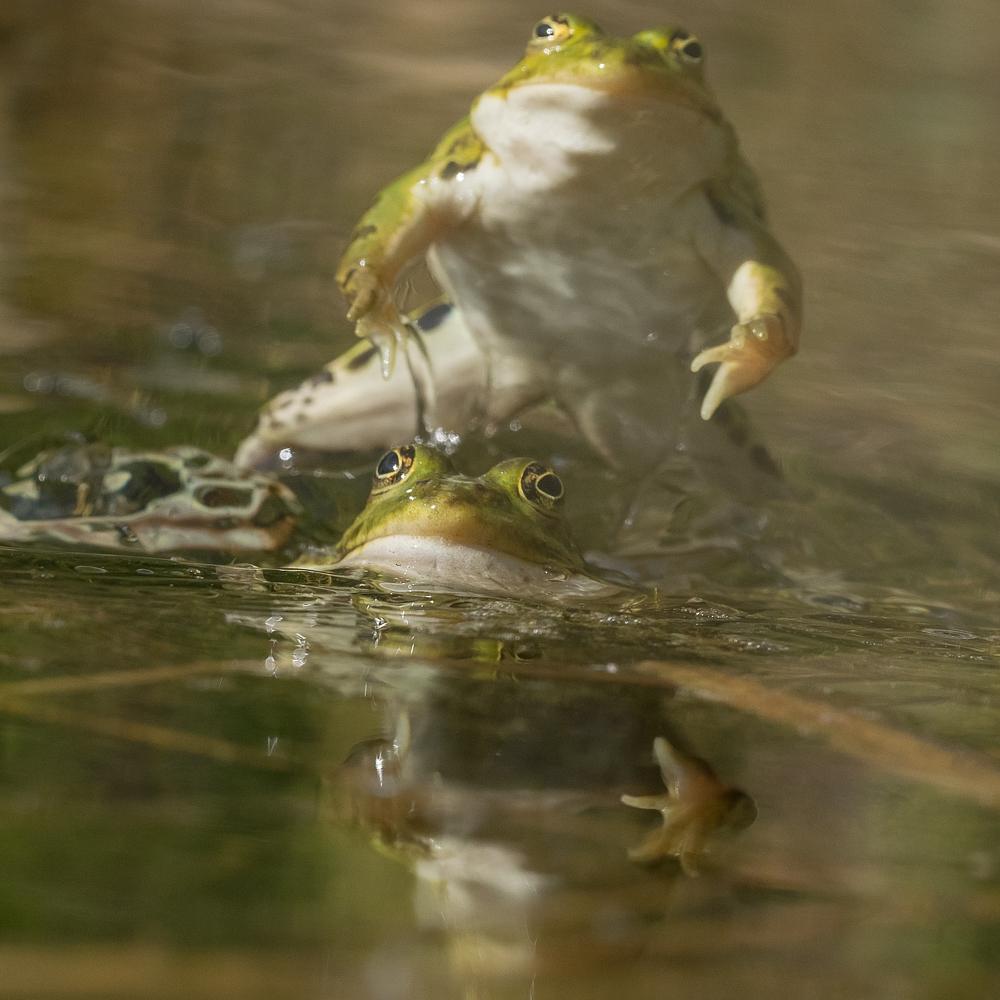2016-05-20-frosch-403.jpg