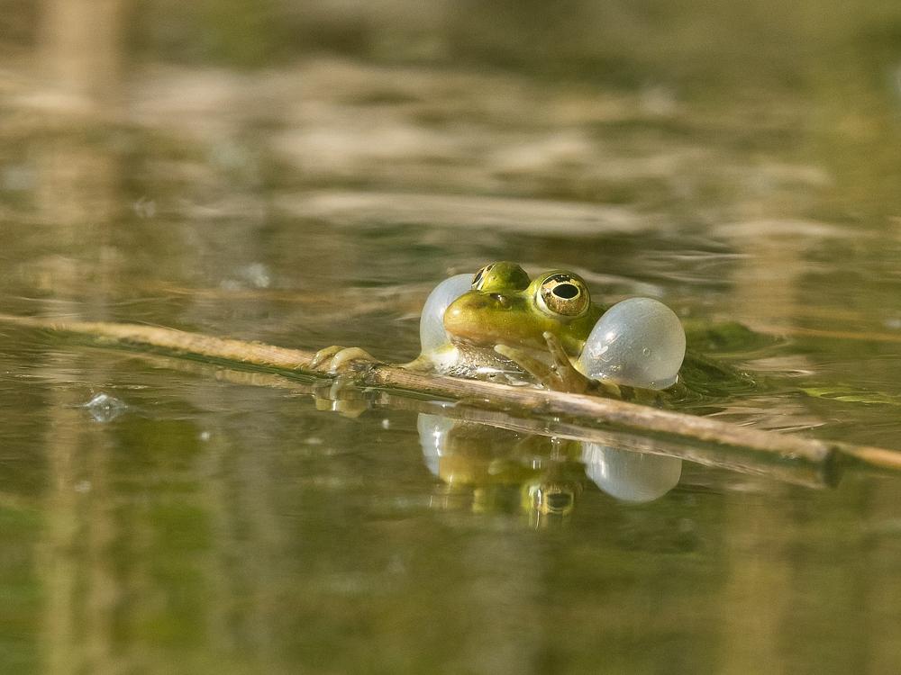2016-05-20-frosch-665.jpg