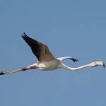 2016-08-28-flamingo-079.jpg