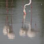 2016-08-28-flamingo-342.jpg