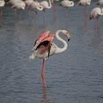 2016-08-28-flamingo-493.jpg