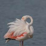 2016-08-28-flamingo-611.jpg