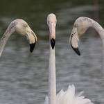 2016-08-28-flamingo-632.jpg