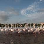 2016-08-28-flamingo-829.jpg