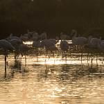 2016-08-28-flamingo-1015.jpg