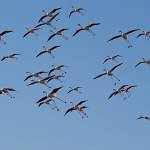2016-08-30-flamingo-1171.jpg