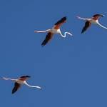 2016-08-30-flamingo-1350.jpg