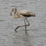 2016-08-30-flamingo-1423.jpg