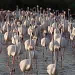 2016-08-30-flamingo-1553.jpg