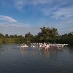 2016-08-30-flamingo-1675.jpg