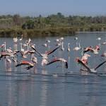 2016-08-31-flamingo-038.jpg