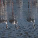 2016-08-31-flamingo-135.jpg