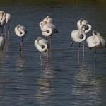 2016-08-31-flamingo-178.jpg