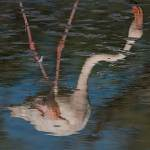 2016-08-31-flamingo-188.jpg