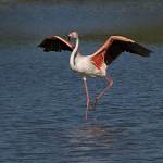 2016-08-31-flamingo-245.jpg
