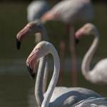 2016-09-01-flamingo-002.jpg
