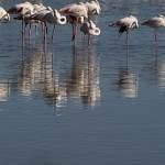 2016-09-01-flamingo-155.jpg