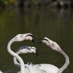 2016-09-01-flamingo-200.jpg