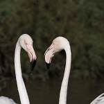2016-09-01-flamingo-216.jpg