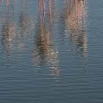 2016-09-01-flamingo-265.jpg