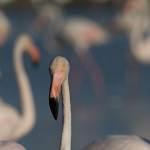 2016-09-01-flamingo-267.jpg