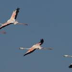 2016-09-01-flamingo-301.jpg