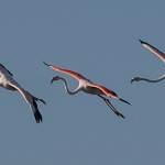 2016-09-01-flamingo-002-2.jpg