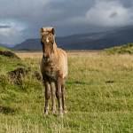 2014-09-10-horses-038.jpg